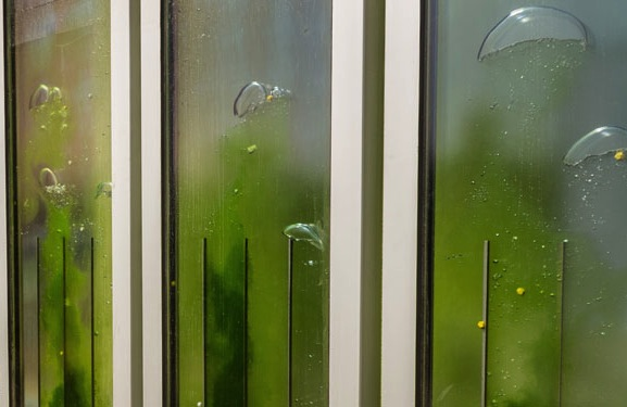 Is algae the next sustainable building technology?