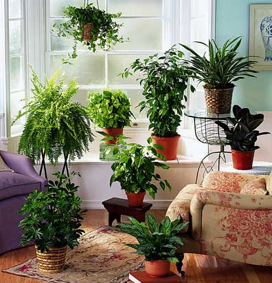 The fifth estate indoor toxins the new frontier for for Indoor plants for better air quality