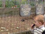 CERES environmental farm in Melbourne is a community affair