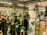 Plants at Aurecon's 5 Star Green Star Perth office