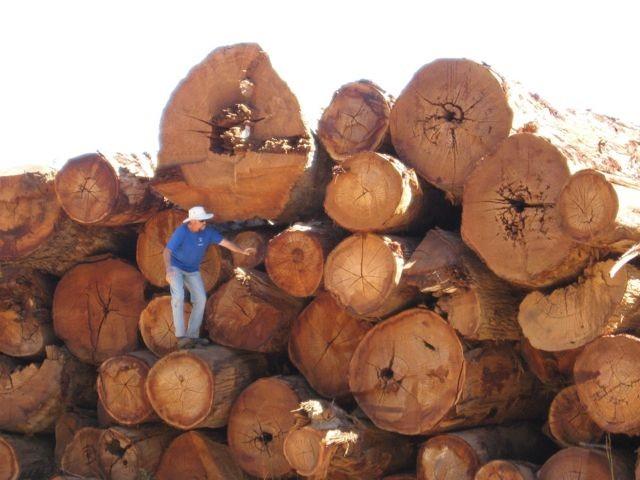 Forest Stewardship Council Australia & New Zealand | LinkedIn