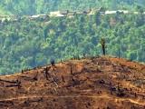 Deforestation_in_Burma