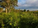 AECOM's Rouse Hill landscape restoration