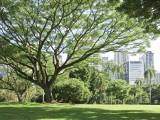 UrbanForest1