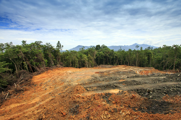 Rainforest in Borneo being destroyed to make way for an oil palm plantation.