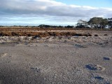 The proposed site of the Seacombe West development, showing salinity impacts