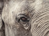 elephant-1599763_1920