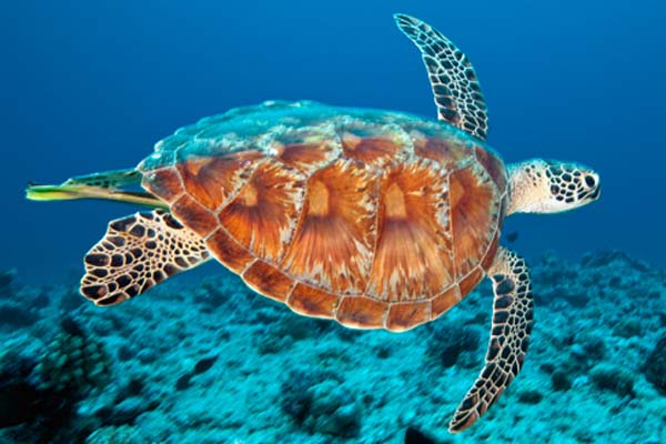 Sea Turtle Jobs