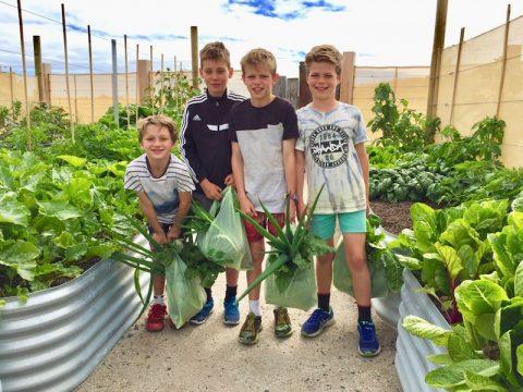 harvesting in the community garden