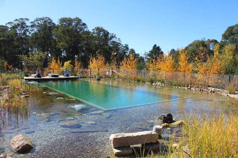 Natural Swimming Pool Business Is Booming The Fifth Estate