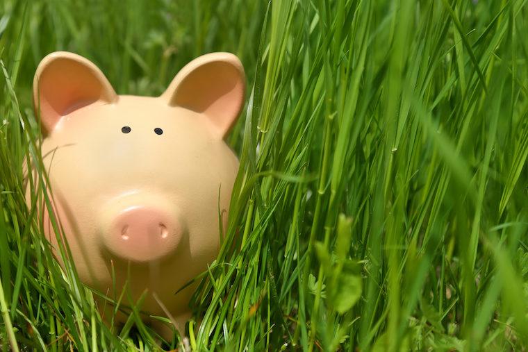 Piggy bank in green grass,closeup background