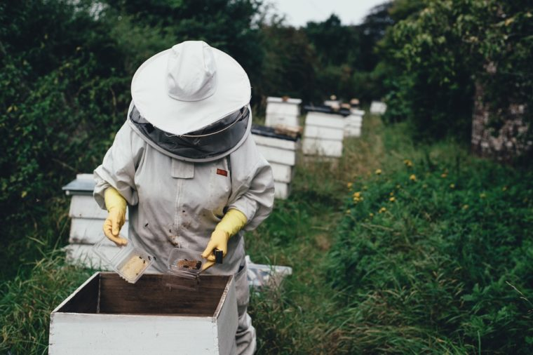 what's the buzz about native bees