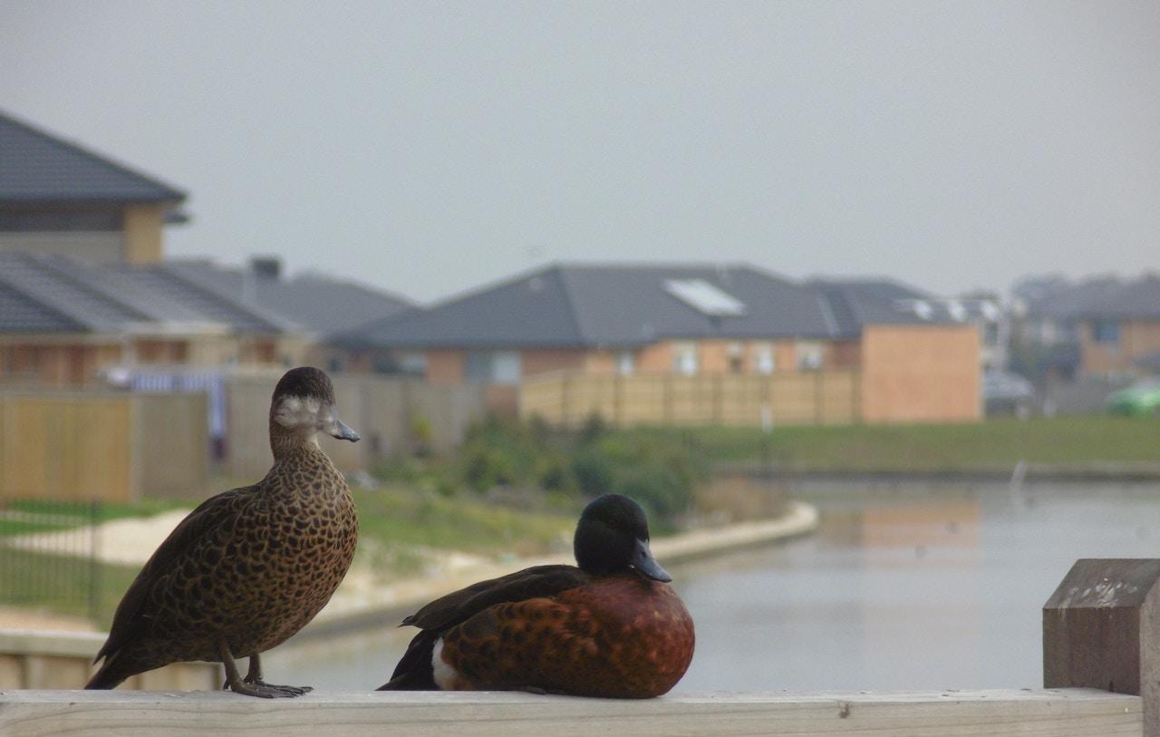 housing development with ducks