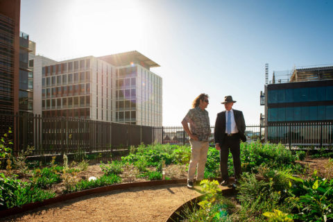 Mirvac Rooftop farm_Clarence and Governor of NSW