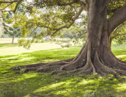 How to love our green open spaces and help them grow