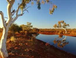 Becoming Indigenous: Future cities as a network of waterholes connected by Songlines