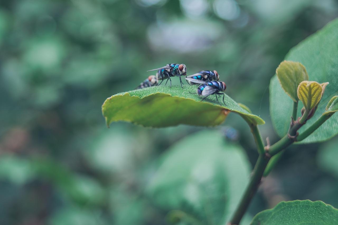 flies food waste