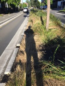 nature strip in glebe man shadow