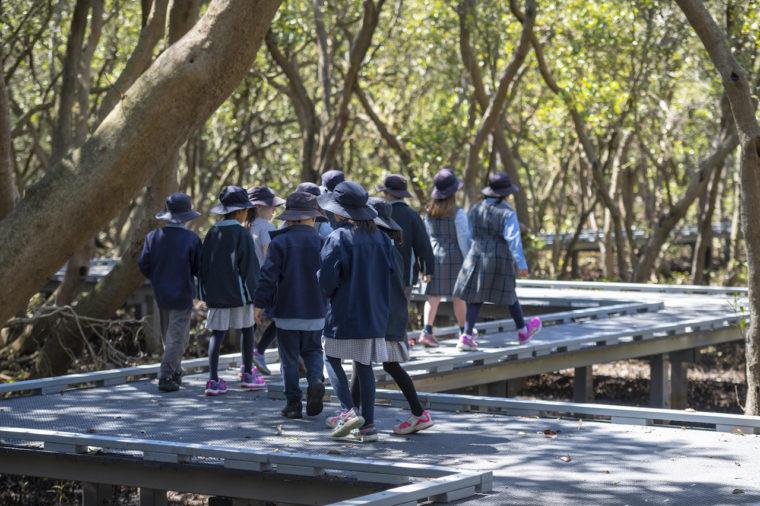 school children walking mangroves
